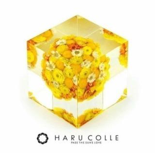 クリスタルアートリウム 札幌 3Dハーバリウム 認定